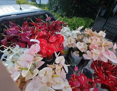Orquídeas Amazónicas